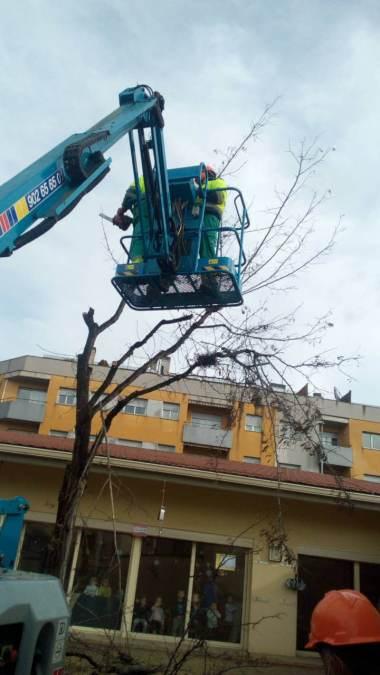 replantacio arbre al Molinet (5)