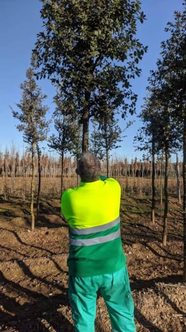 Projecte Vilanova Natura arbres 2