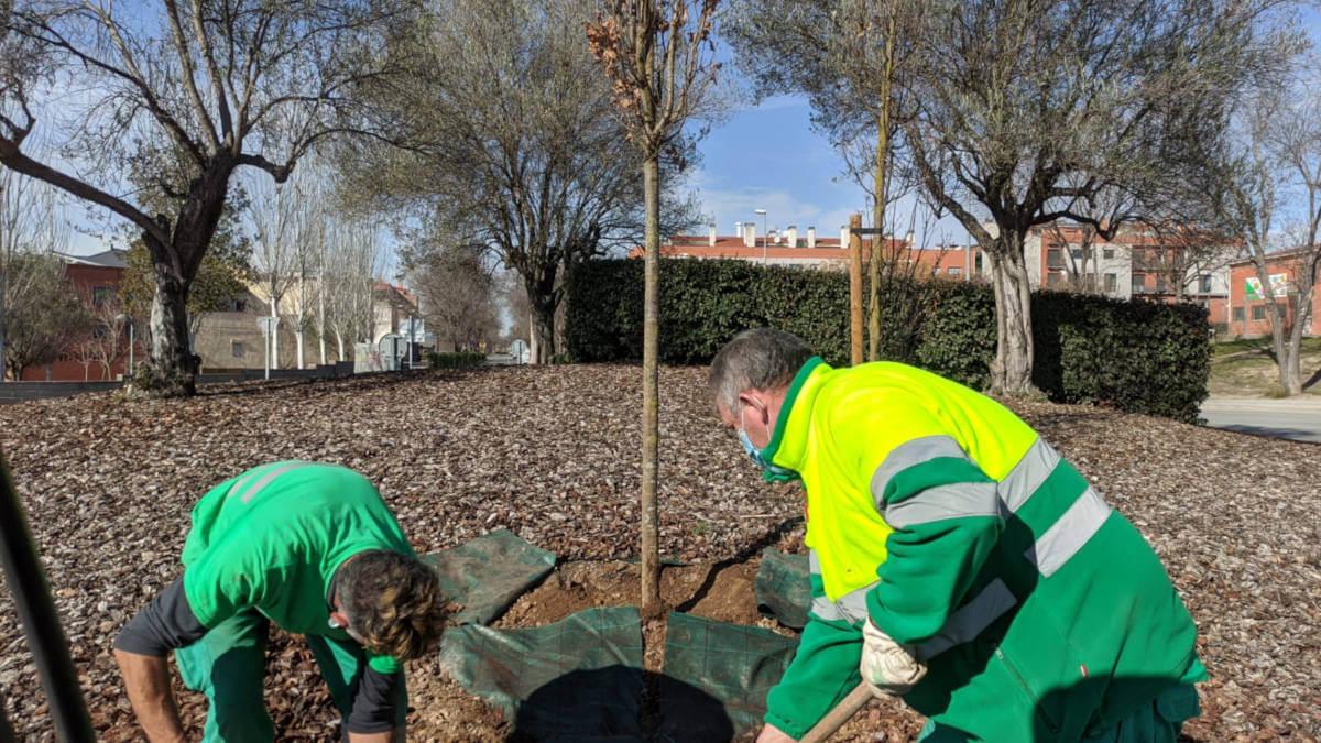 plantacio c244 barri lluna feb21