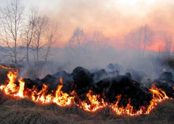 foc forestal