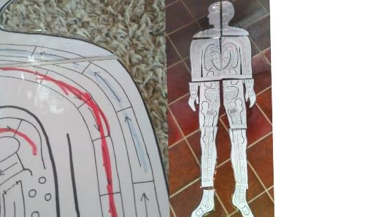 Blut - Homeschooling Experimente - Körper & Anatomie