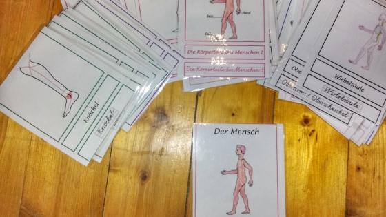Flashcards - Homeschooling – Experimente zum Thema Körper und Anatomie Teil 2