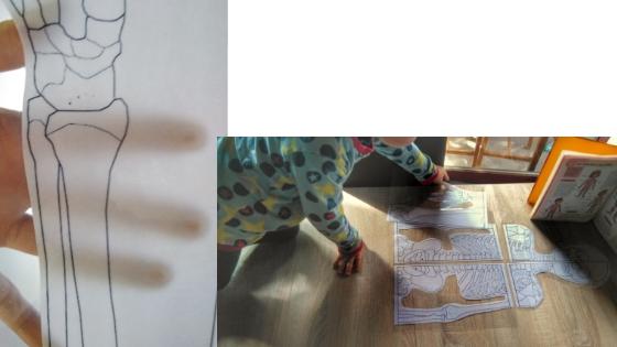 Skelett - Homeschooling Experimente - Körper & Anatomie