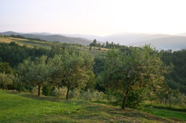 Olive grove & view from Villa Bastiola