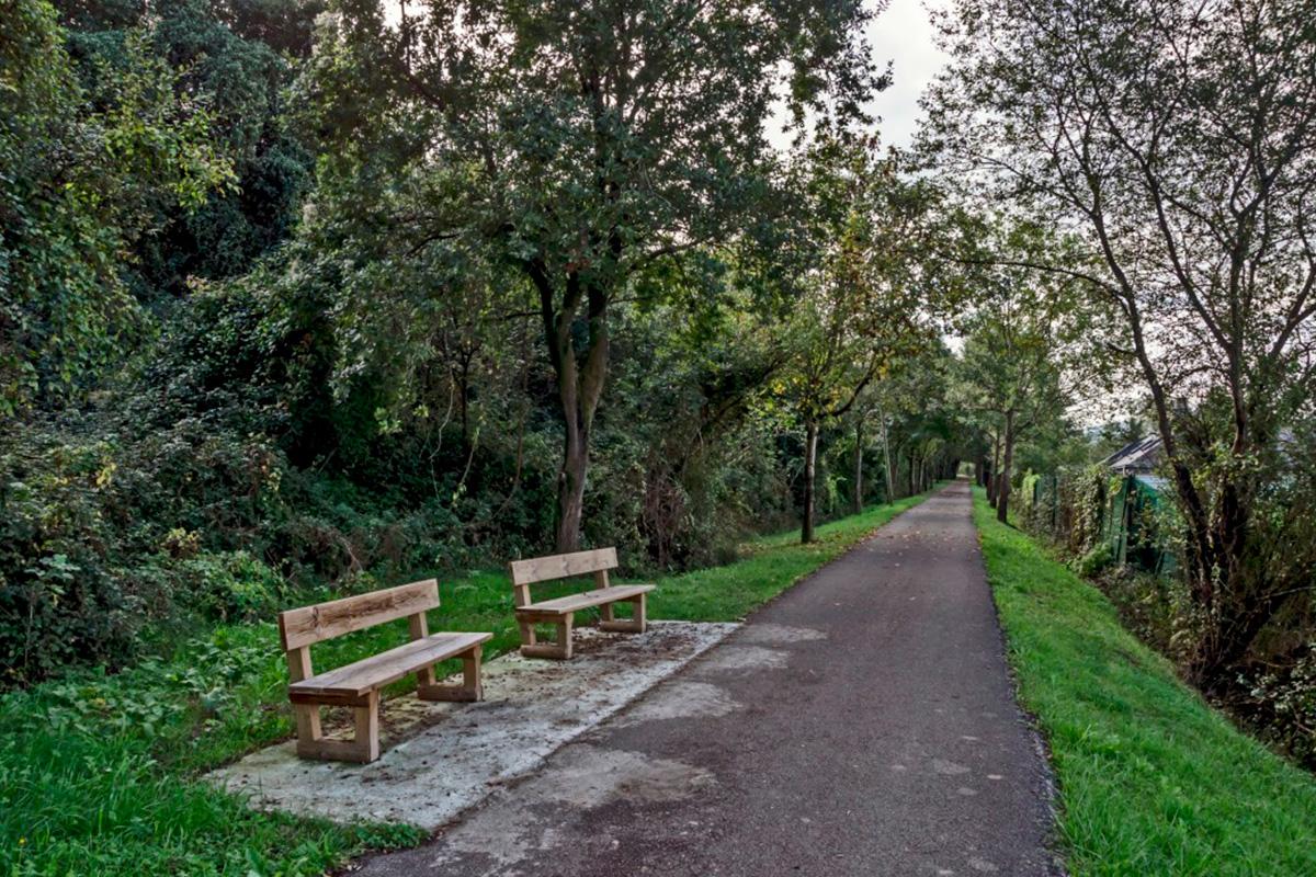 Imagen de camino entre árboles