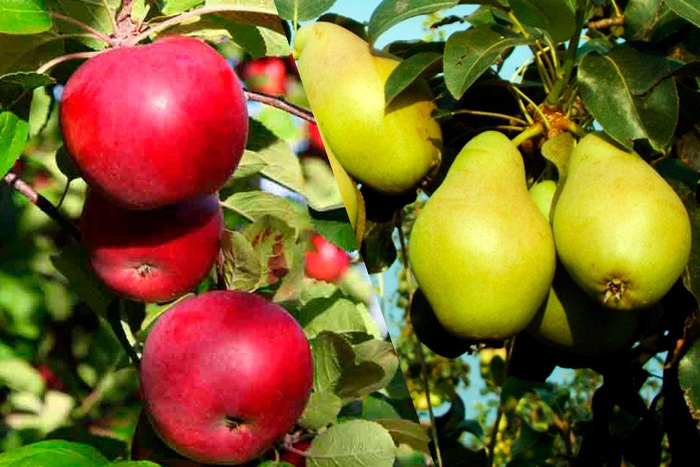 Imagen de portada árboles frutales