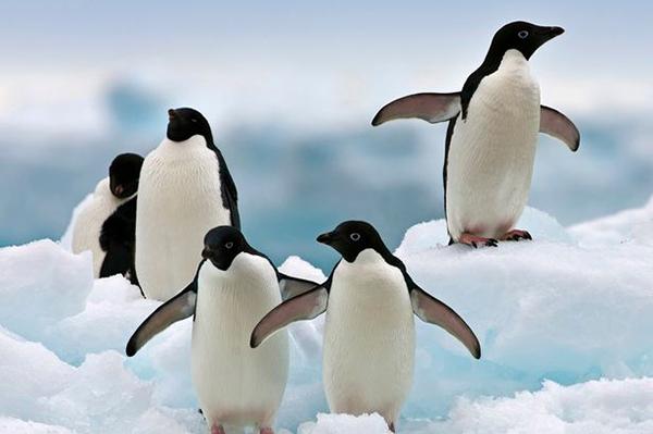 Penguin Extinction_2