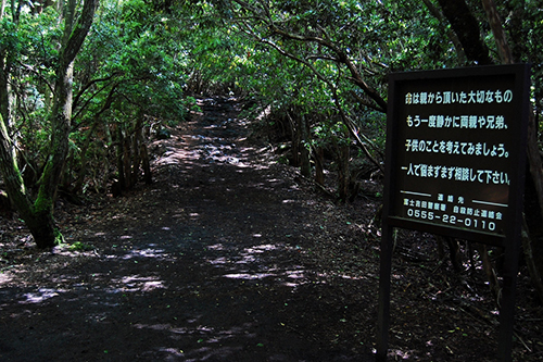 Suicide Forest_5