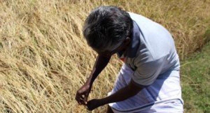 Balasubramaniam Palanisamy, a farmer from Chettipalayam village, survived drought with organic farming. (Photo by Sharada Balasubramanian)