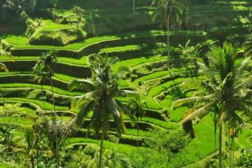 Bali's noordkust