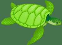 sea-turtle_sm