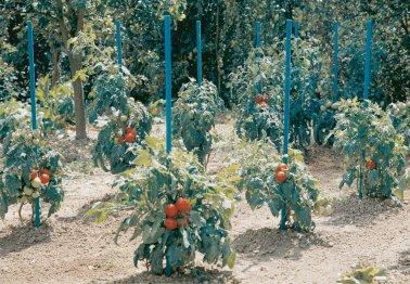 aquatom jardinerie villaverde