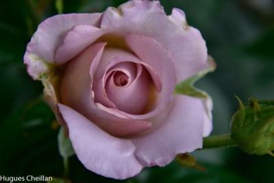 La Roseraie (7)