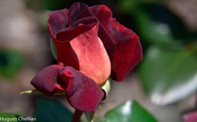 La Roseraie (8)