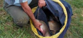 AAPPMA de Verberie : de belles prises au concours de pêche !
