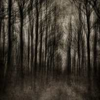 Philippe Lambert - La forêt hantée