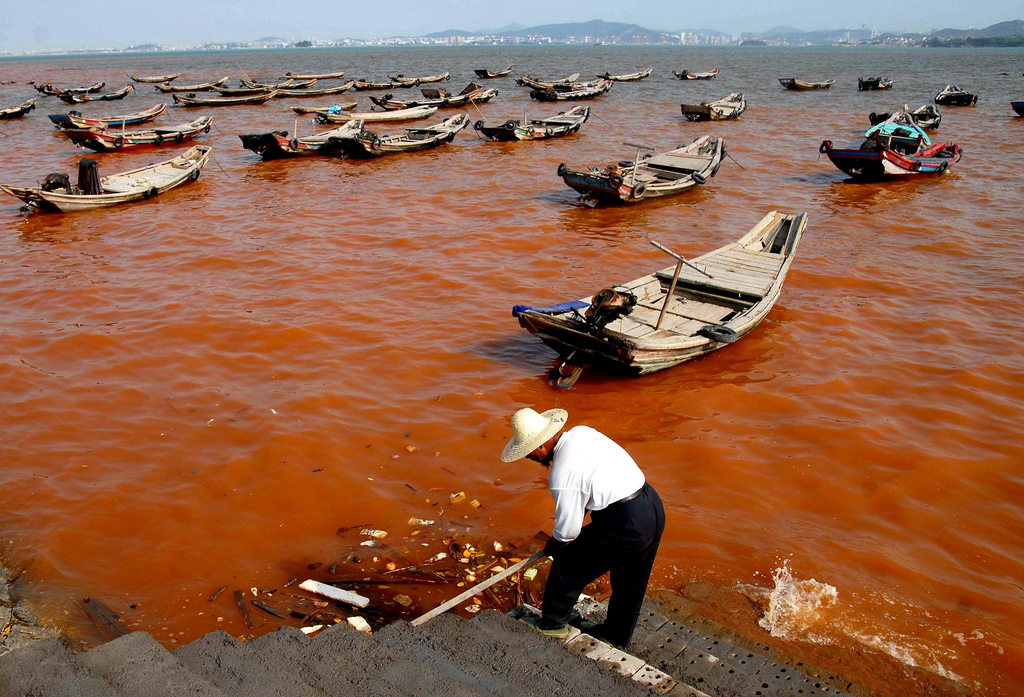 Worst Red Tide May Affect the Eastern Visayas – What Causes It?