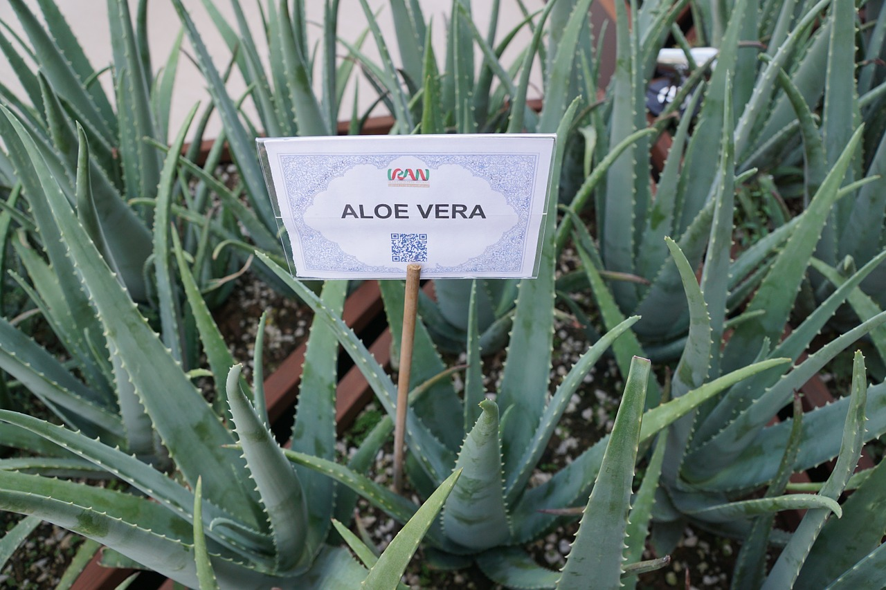 What Does an Aloe Vera Gel Do?