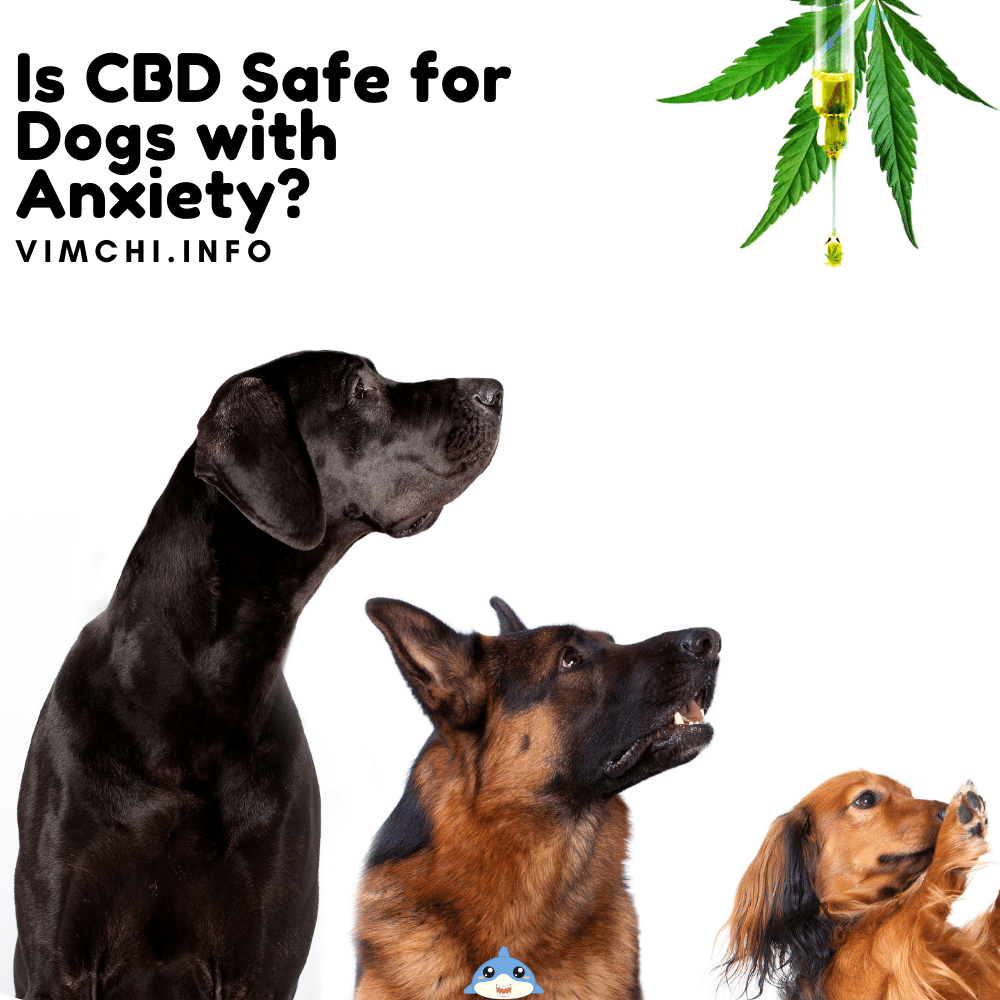 is cbd safe for dogs with anxiety