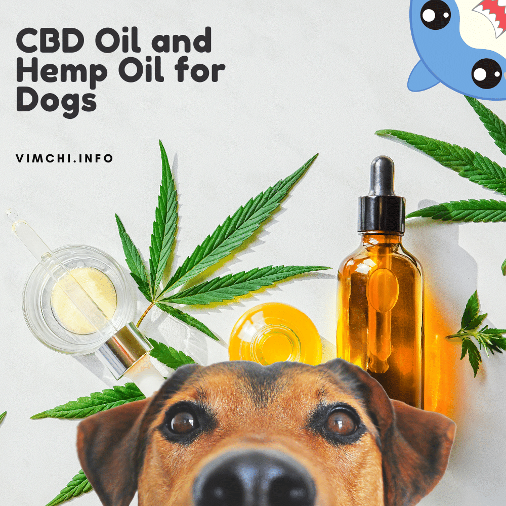 Is CBD Oil for Dogs the Same as Hemp Oil featured