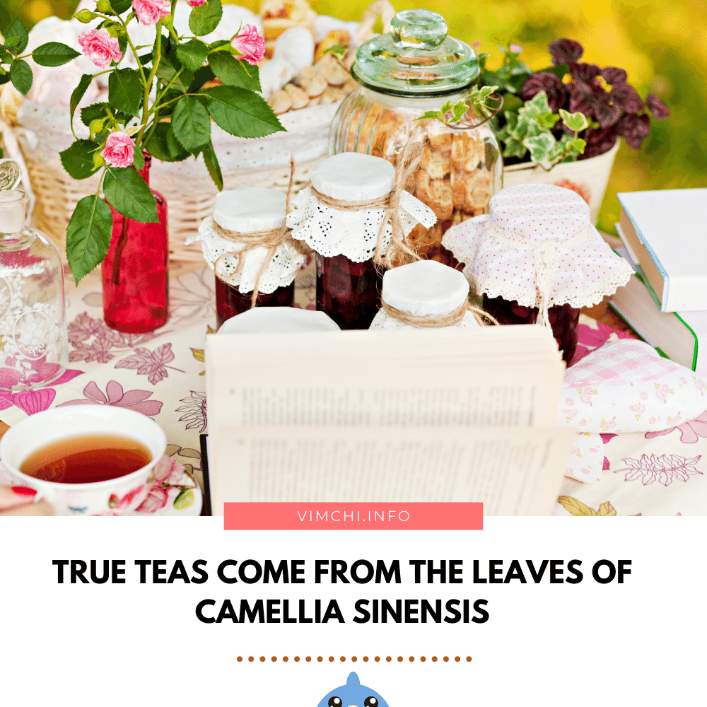 Is Herbal Tea Good for You - true teas