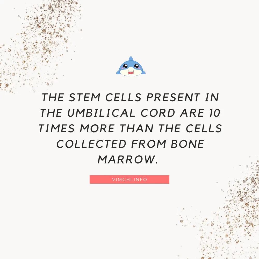 Umbilical Cord Stem Cells Advantages and Disadvantages - stem cells present
