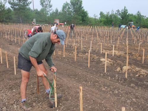 Viticulture plantation de la vigne
