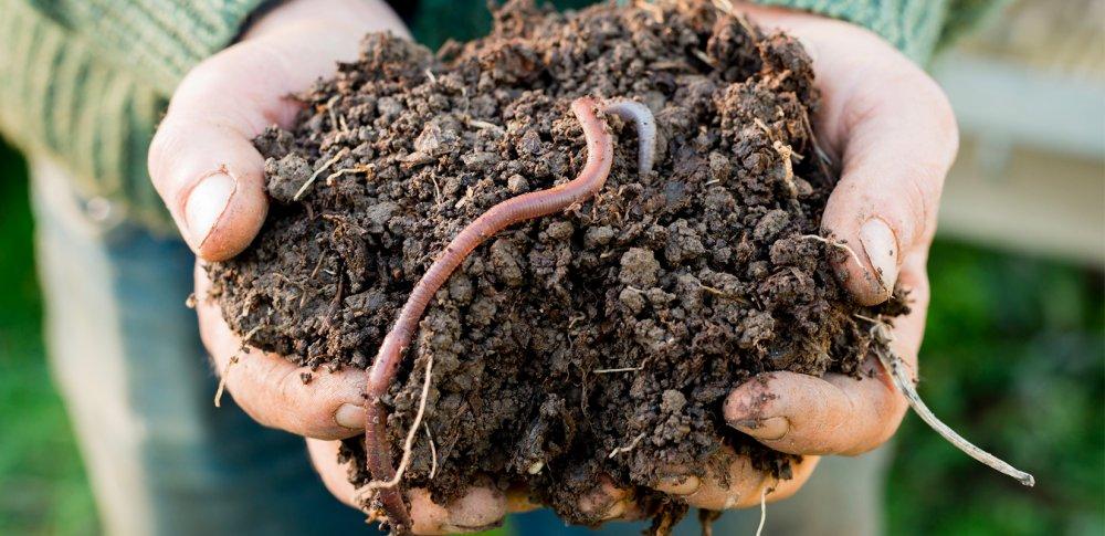La santé des sols de la vigne est un préalable pour l'oenologie