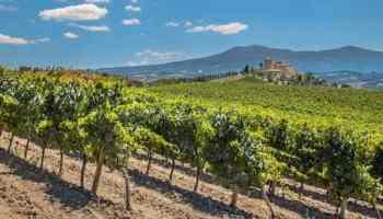 Vin du Languedoc Roussillon