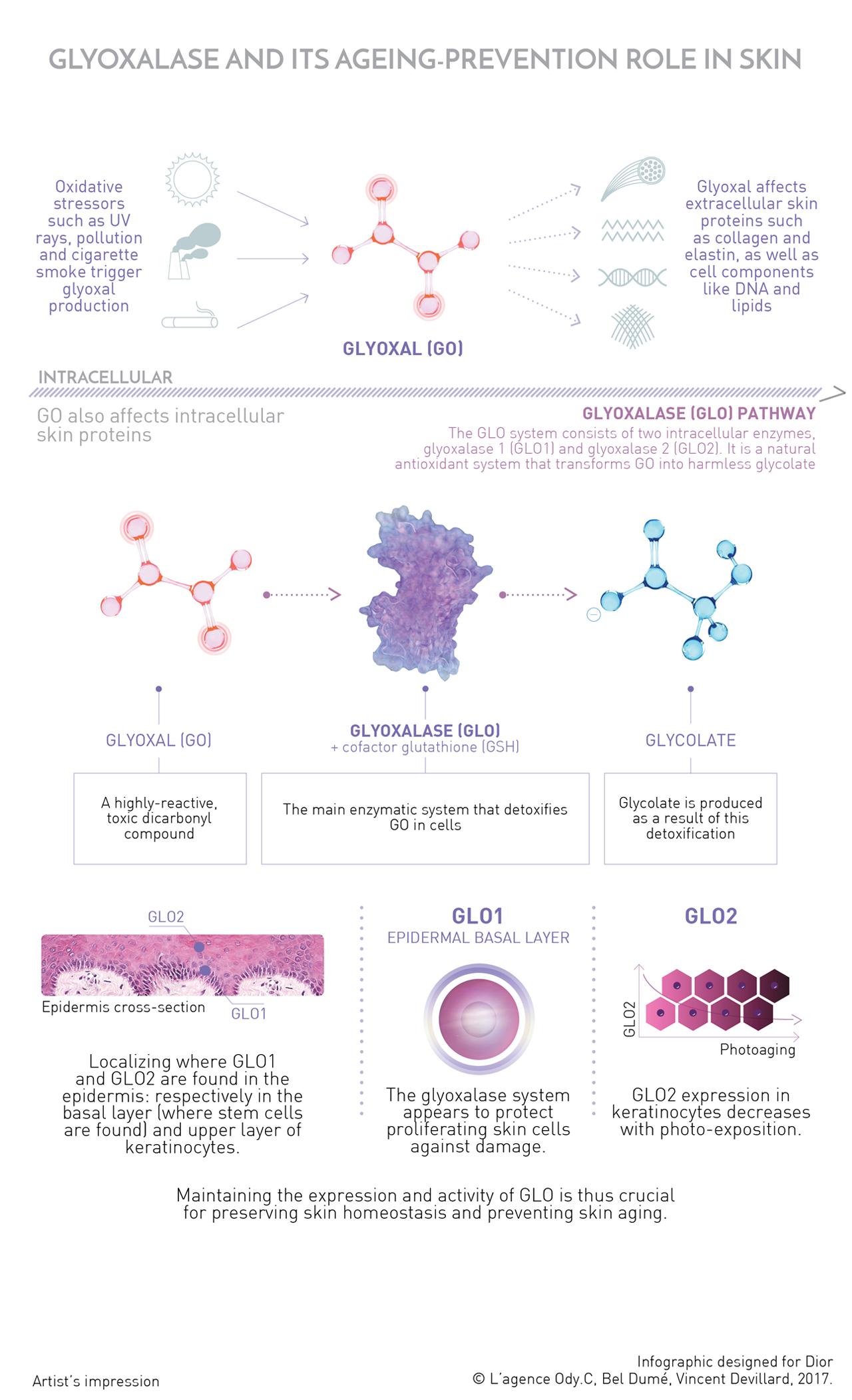 Infographie EN