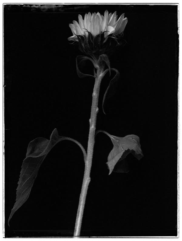 Vinciane Lacroix photographie en clair obscur résultat du défi #2