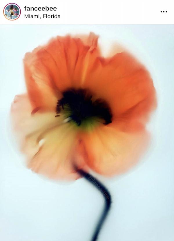 Fanny Cohen, photographie