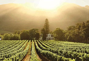 Wine & Brewing Heritage