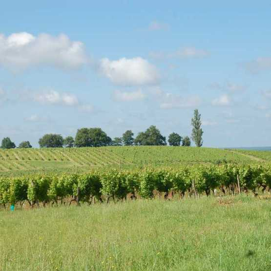 ▷ Vineyards, wine properties and parcels of vines for sale in France