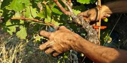 Vinibee-vin bio et naturel-Domaine de l'Ausseil-Jacques de Chancel2