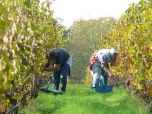 Vinibee-vin bio et naturel-Domaine de Bablut-Christophe Daviau2