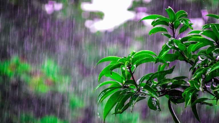 Rain #SoulfulSunday