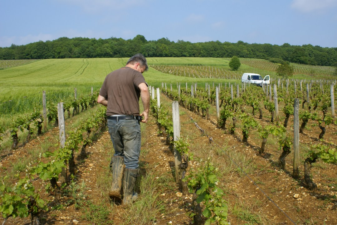 The guided classical wine tours are offered to <strong>epicureans</strong> wishing to discover Upper-Loire appellations.