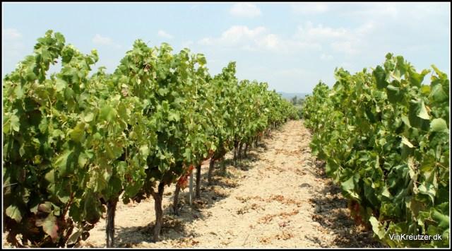Sardegna Vineyard