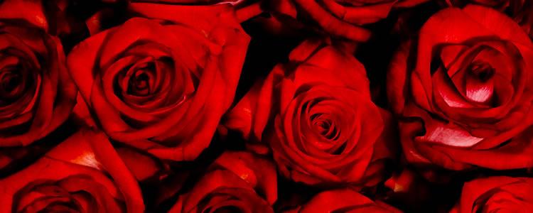 rosas-rojas-aroma-02