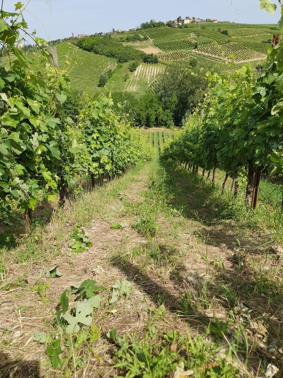 Le vigne di Bisi lasciano ottimi ricordi