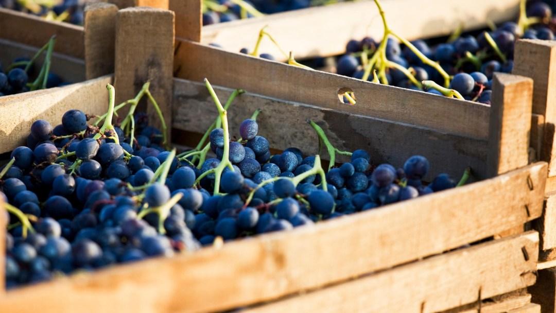 Uva in cassetta di legno