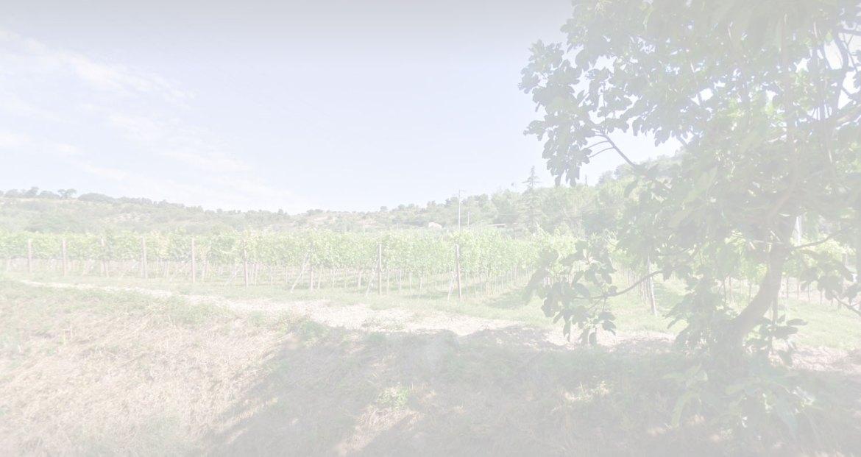offerta Kurni 2014 – Oasi degli Angeli vinopoly.it