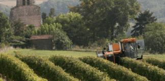 Vinotype | Sauvignon