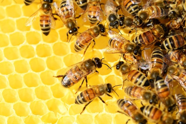 Saving the Bees: What's All the Buzz About?