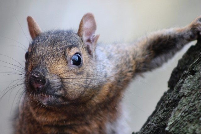 Vanier College Conspiracies: The Problem with Squirrels