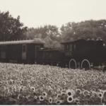 A Train Story