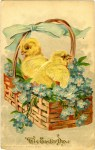 Baby Chicks in an Easter Basket Vintage Postcard