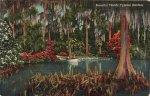 Cypress Gardens Vintage Florida Postcard