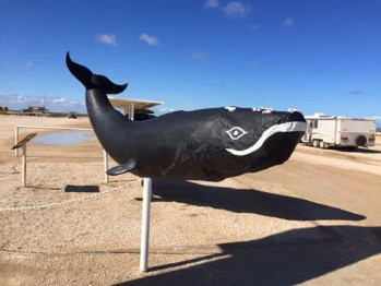Having a whale of a time at the Nullabor Plains Motel